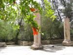 Orange flower and Byzantine Column