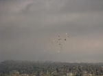 Birds in Flight over Amman