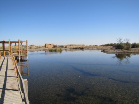 Azraq Wetland, copright 2011 Brian C